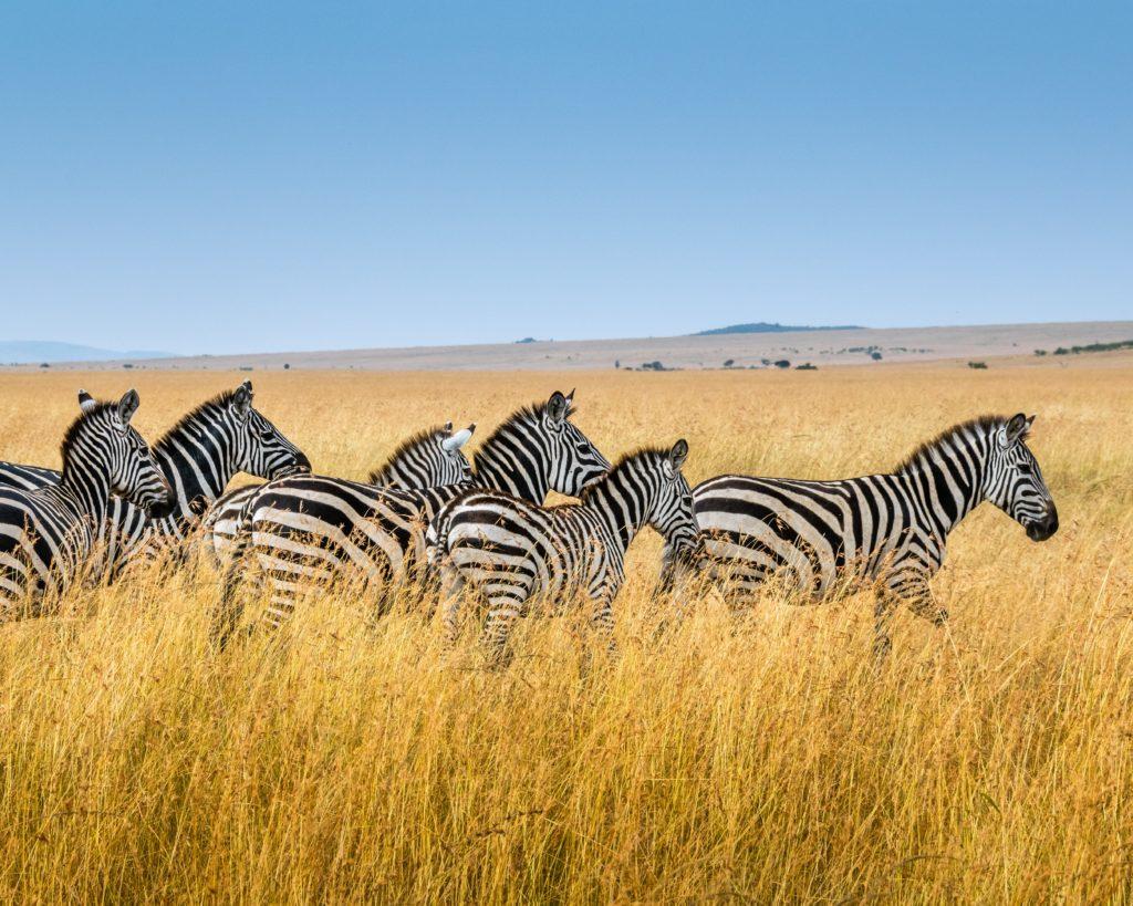 überragende Kenia Reise